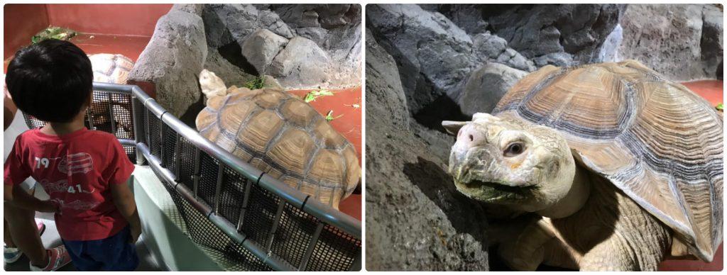 姫路水族館 陸亀もいます