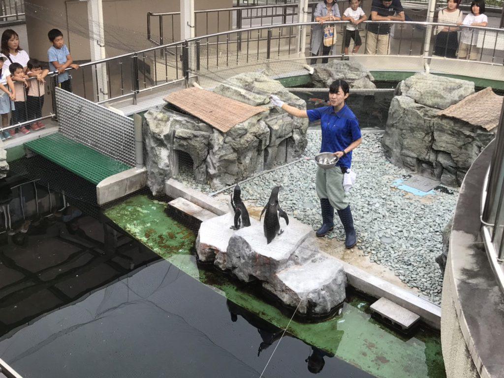 姫路水族館 ペンギンの餌やり