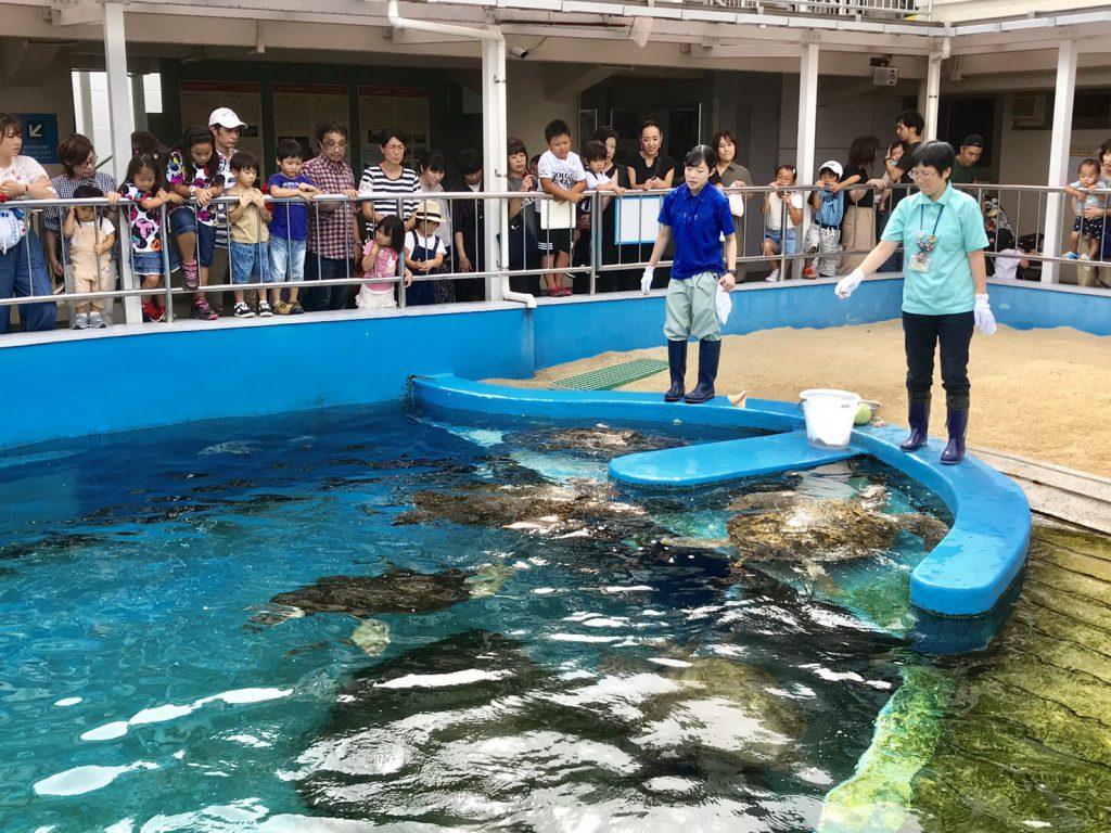 姫路水族館 亀の餌やり