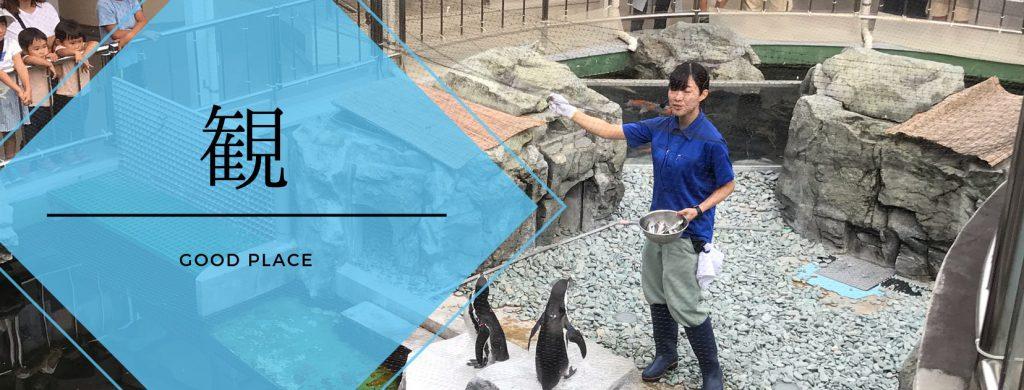 姫路水族館 餌やり観察